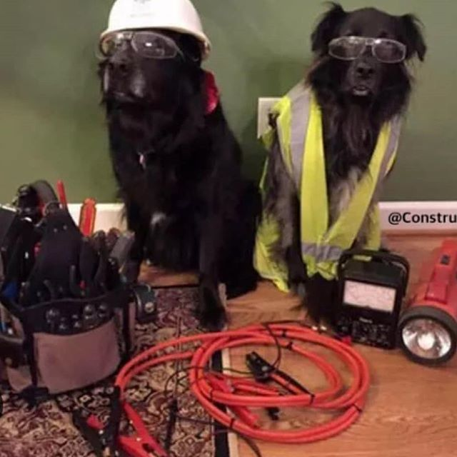 Hiring Day Labradors To Do Some Woofing Contractor Roofing Hardhatlife Constructionzone Constructionlife Hardhats Hard Hats Labrador Construction Zone