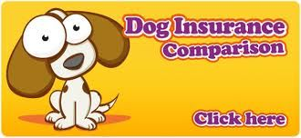 http://www.comparethebigcat.co.uk/insurancequotes/lifestyle/cheappetinsurancecomparison pet insurance comparison