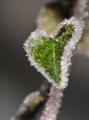 Lonely cold Heart in nature
