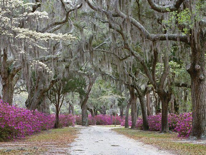 25 потрясающе красивых улиц в тени садов и деревьев