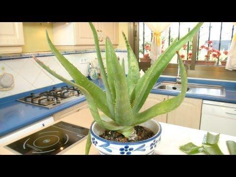 Crema Hidratante de Gel Aloe Vera Natural - YouTube