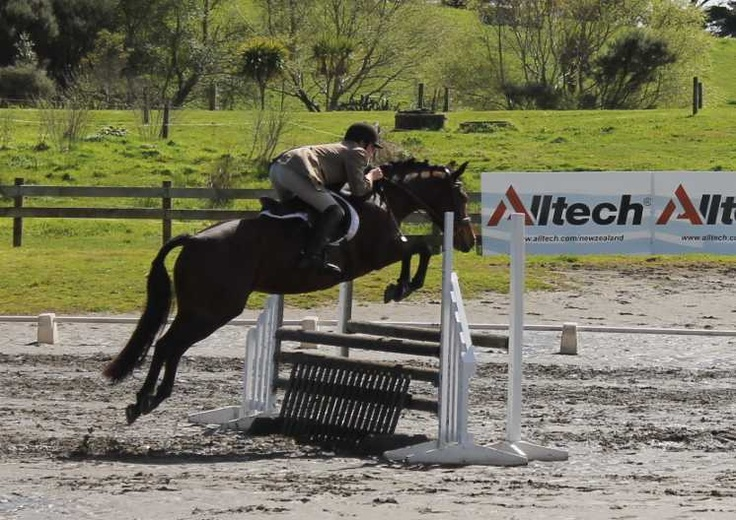 Ballytruckle Sally Gap, welsh cob X tb competing at Hack Showhunter in September 2012, ridden by Conor West