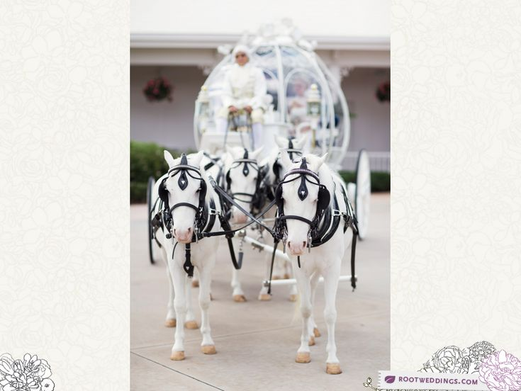 Courtney   Justin : Grand Floridian Wedding Pavilion Ceremony and Citricos Reception