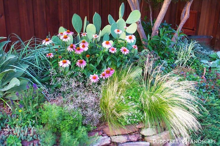 Texas native landscapes gallery dubberley landscape for Low maintenance native plants