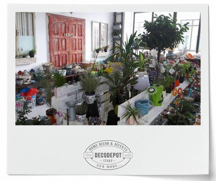 Diferite specii de plante şi flori de casă sau de grădină. Flowers. Plants. Indoor. Outdoor. Garden. Braşov.
