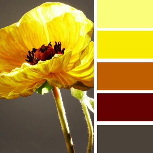 17 best ideas about yellow color schemes on pinterest colour schemes color schemes and gray - Brown and maroon color scheme ...