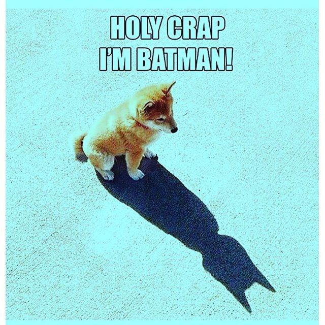 #cat #funnycat #weblol #lol #fail #failed #funny #omg #picoftheday #instadaily #Lolz #Lolpic #funnypic #meme #memepic #haha #lmao #lmfao #hilarious #love #batman