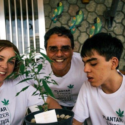 Após autorização para plantar maconha casal passa pelo desafio de produzir extrato de canabidiol