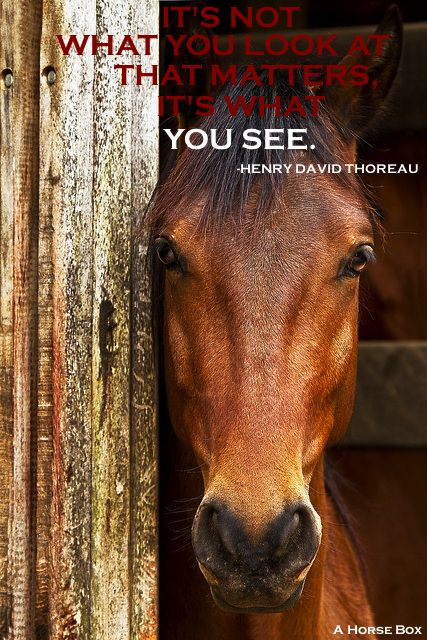 It's what you see that matters! #horse #quote