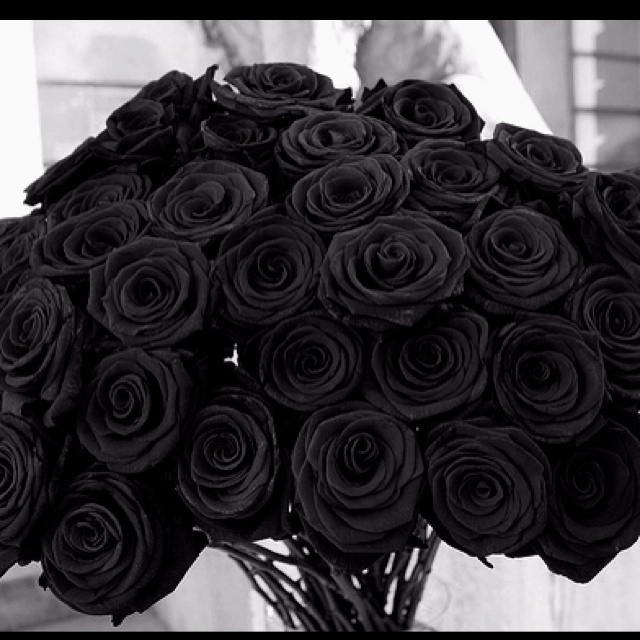22 best Black Magic Rose images on Pinterest   Black flowers, Black ...