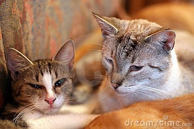 http://www.dreamstime.com/Dastin50_portfolio_pg1#res336776  Two Cats - Download From Over 37 Million High Quality Stock Photos, Images, Vectors. Sign up for FREE today. Image: 6181186