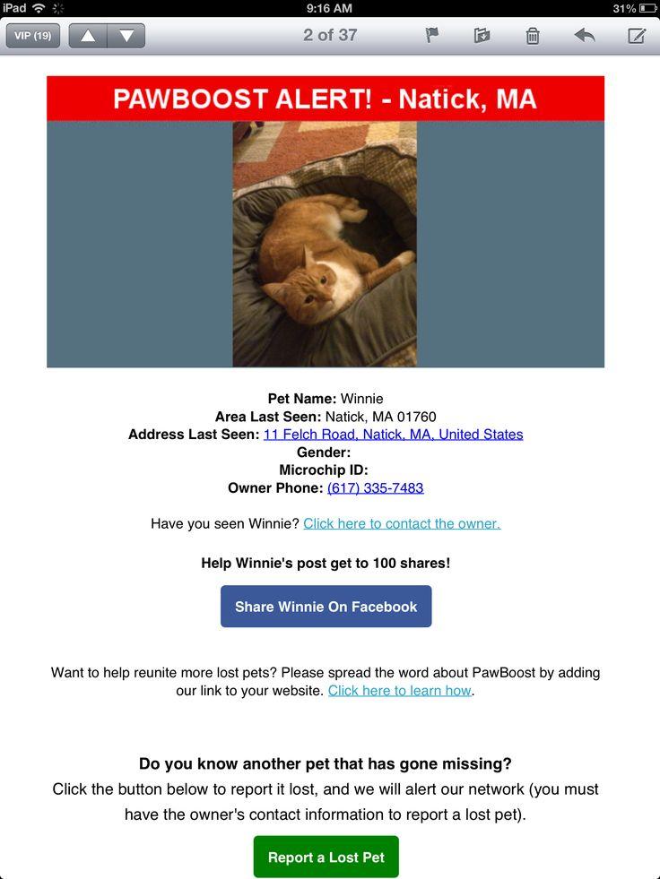 Lost Cat Named Winnie: Natick, MA