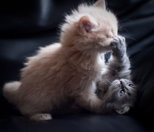 """""""Boop!"""": Funny Cat Pictures, Lobsters, The Games, Adorable, Funny Animal, Kitty, Lockers, Cute Kittens, Furry Friends"""