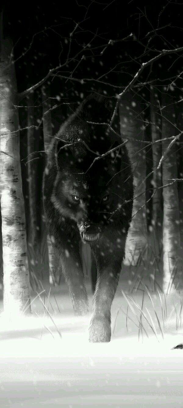 The dark black night Silence is there instink to approach undetected.