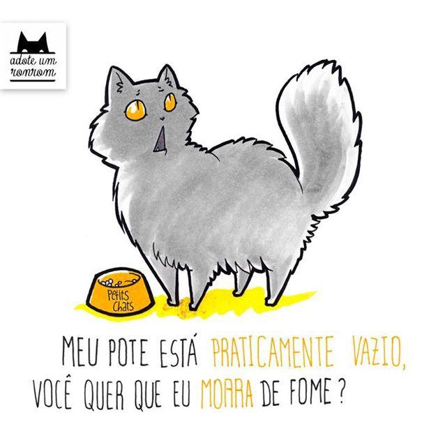 como-diria-gato15