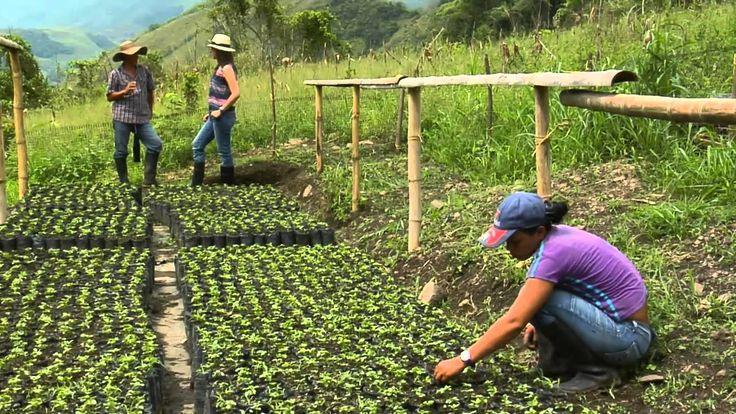 Producción de Maracuyá en Escuela de Campo