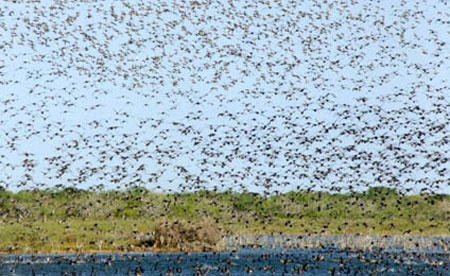 Mexico duck hunting — a waterfowler's dream trip.