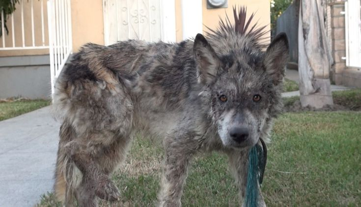Sick, Starving Dog Found On Street May Not Be What She Seems    For the love of animals. Pass it on.