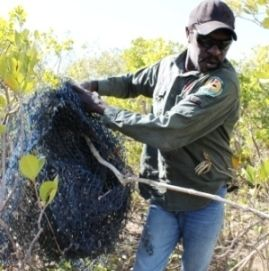 Kowanyama Land and sea ranger retrieving a ghost net. Commendable work undertaken by our Indigenous Rangers, not widely known about.