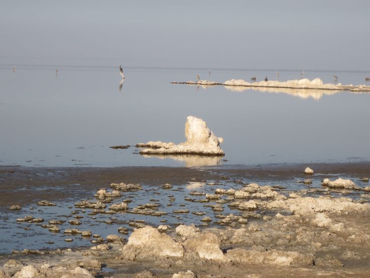20 best images about the salton sea on pinterest water for Salton sea fishing