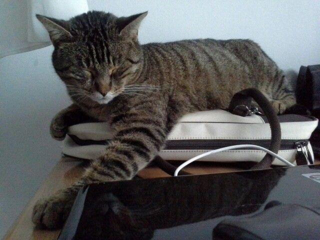 Clyde, il custode del computer!