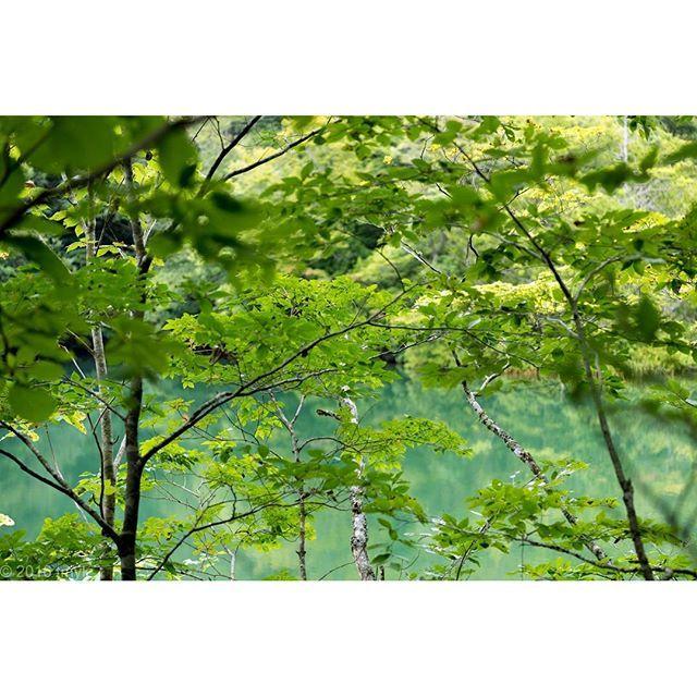 【tmykphoto】さんのInstagramをピンしています。 《自然に癒やされました。  2016.9.12  #秋田県 #秋田 #白神山地 #十二湖 #木 #森 #湖 #世界遺産 #世界自然遺産 #一人旅 #旅 #東北旅行 #travel #trip  #写真好きな人と繋がりたい #カメラが好きな人と繋がりたい #ファインダー越しの私の世界 #写真 #カメラ女子 #カメラ男子 #japan #photo #photography #photograph #followme  #一眼レフ #ニコン #nikon #d810 #東京カメラ部》