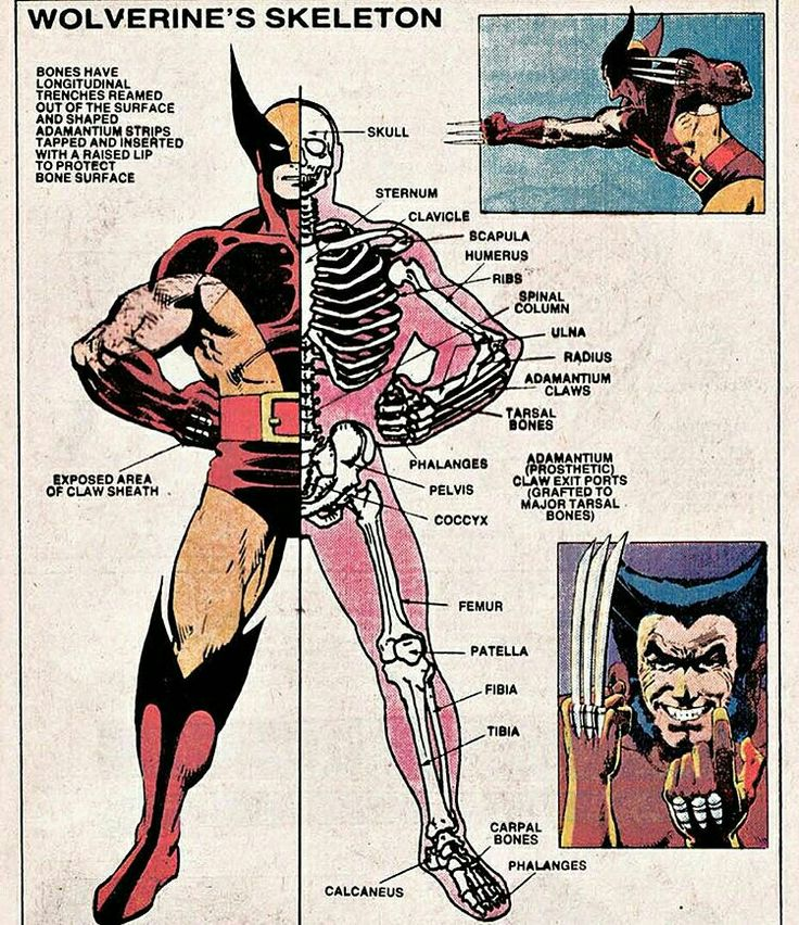 From the official handball of the Marvel Universe - Wolverine's Skeleton.