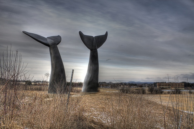 Whale tails in pasture Burlington, Vermont by Fitzsimmons Photography (FitzPhoto), via Flickr
