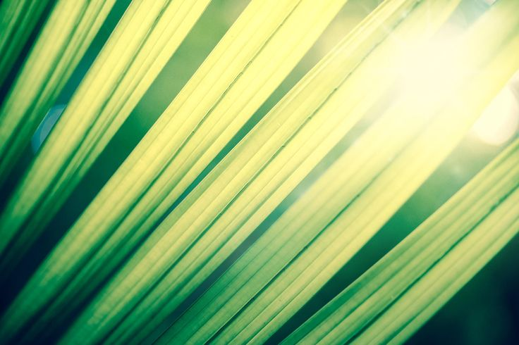 Green tropical leafs with backlight