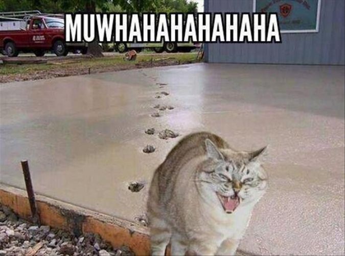 .........this made me crack up! Only a cat could be this evil