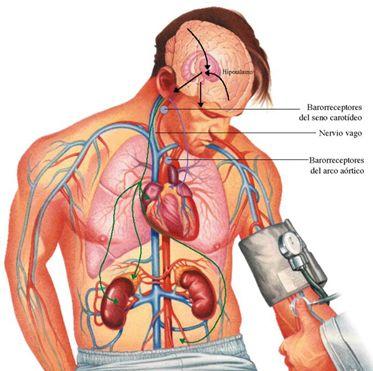 Aký by ste mali mať krvný tlak podľa vášho veku? My vám to povieme