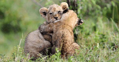 Dziś Dzień Przytulania!   Jeśli jesteś odważny/a podejmij WYZWANIE - przytul kogoś nieznajomego! Challenge accepted? :)   #Tulimyyyy #DzieńPrzytulania #PrzytulKogoś