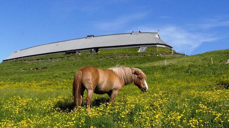 Horse On A Fiels In Norway By Tamara Sushko Photograph - Horse On A Fiels In Norway by Tamara Sushko