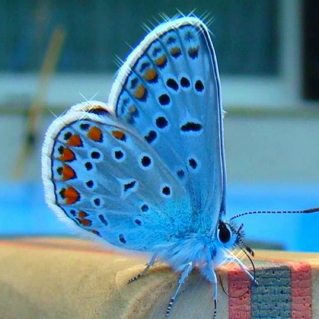17 Best Images About Kids-Butterfly Printables, Crafts