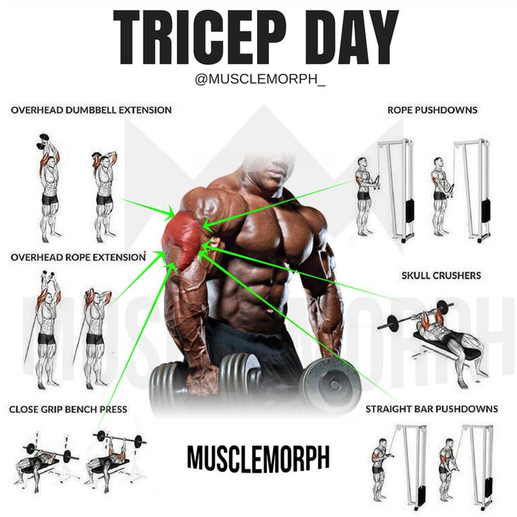 tricep day triceps workout gym musclemorph https://musclemorphsupps.com/