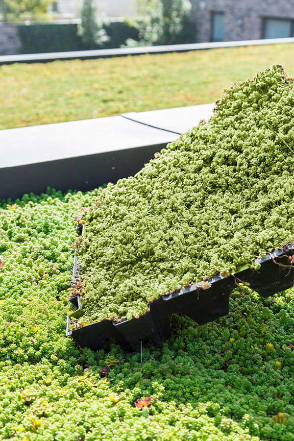Eccosedum Are Ready Made Green Roof Tiles With Five Different Layers And At Least Seven Different Types Of Sedum Plants Combined Sedum Plant Green Roof Plants