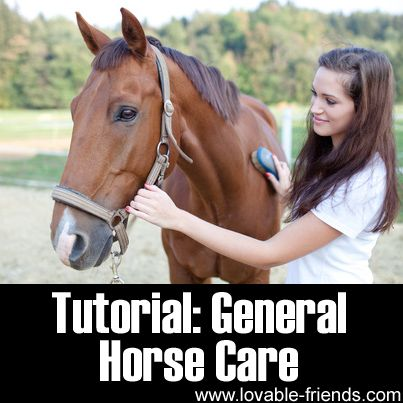 Please Share This Page: Photo – © berc – Fotolia.com Spending life with an equine friend is a pleasant experience but the joy horses offer their owner also demands much responsibility in exchange. As an owner, you need to take good care of your horse. We found a very informative article that tackles general horse …