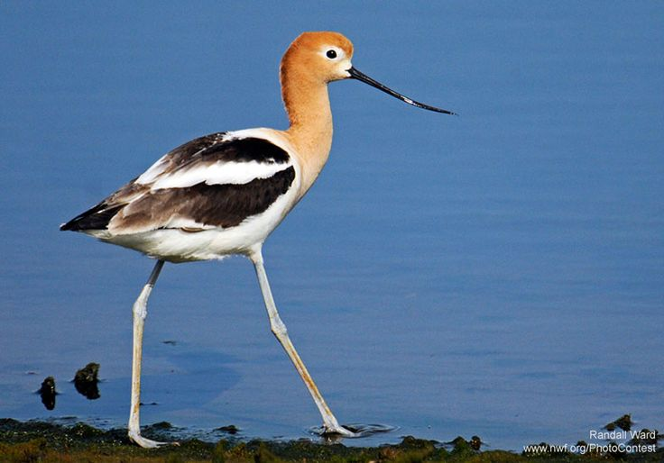 Up to 1/2 of North American bird species nest or feed in wetlands. More facts about wetlands!