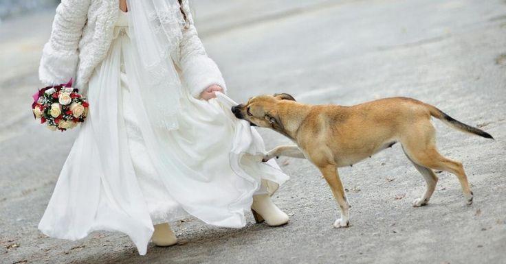 Μπήκε κρυφά στον γάμο, με μια βόμβα κάτω απ'το φόρεμά της. Ένα σκυλί όμως θυσίασε τη ζωή του για τους ανυποψίαστους καλεσμένους. Crazynews.gr