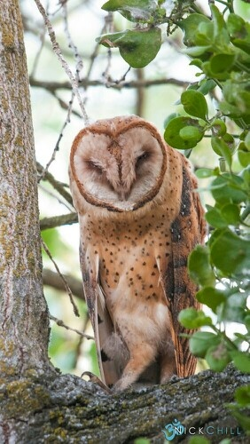 381 Best Owl Images On Pinterest