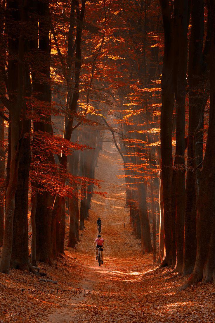 Biking the indian summer by Frans Deeders #AutumnLeaves