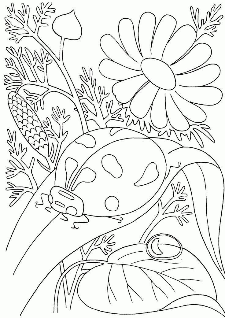 33 best ThanksGiving Coloring Pages images on Pinterest Coloring - fresh coloring pages for nature