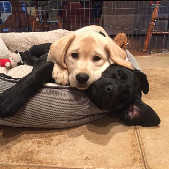 These two who are demonstrating a proper snuggle session.