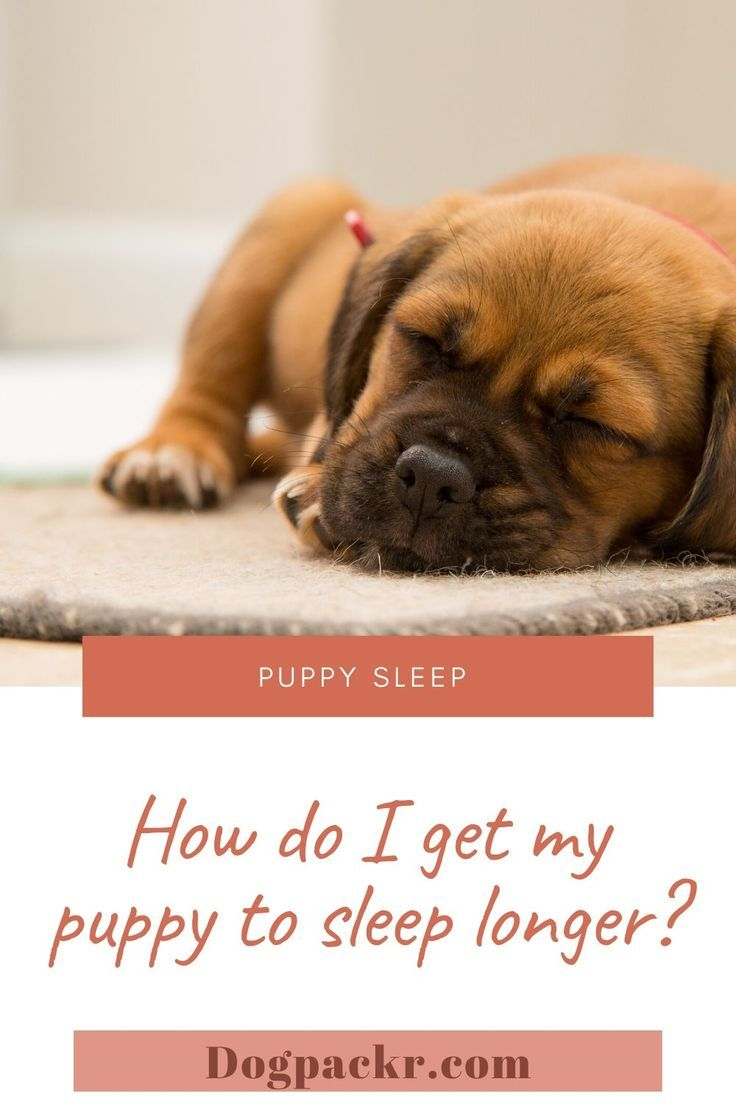 How Do I Get My Puppy To Sleep Longer How Do I Get My Puppy To Sleep Through The Night In 2020 Sleeping Puppies Puppies Getting A Puppy
