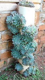 Suculentas ( usando a imaginação na hora de desplanta-las do vaso convencional)        Suculentas são lindas baratinhas ereproduzem fác...