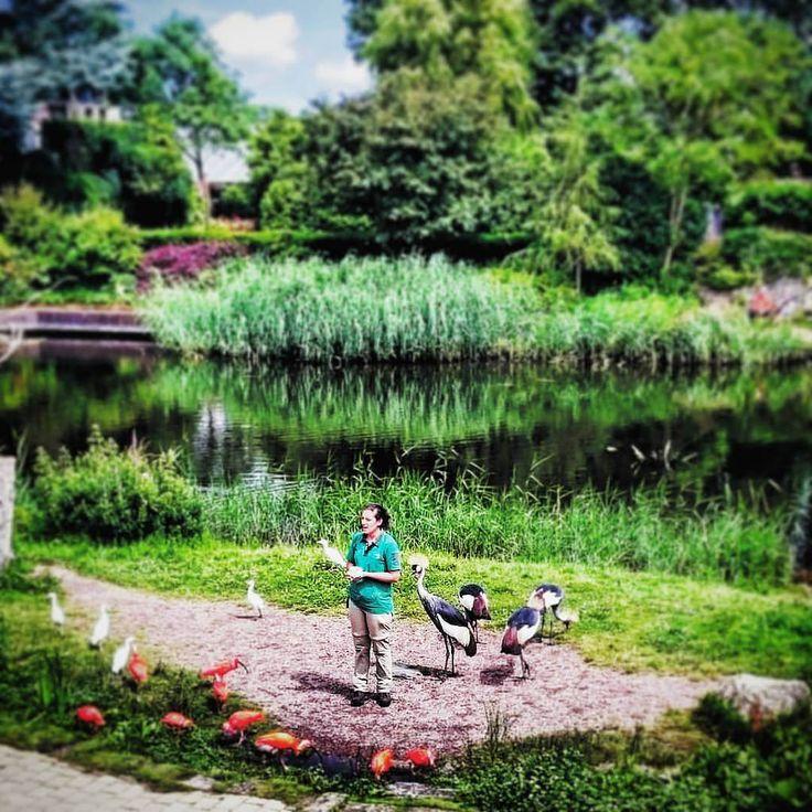 https://flic.kr/p/KaEgfS   #todaypic: #Birdshow!   #Vogelshow!  (#Alphenaanderijn,#2016)  #nederland,#ZuidHolland,#Holland,#nederland,#Europa,#larkfilter,#Tilshift,#Vignette,#Zoo,#Avifauna  (BY: #KJVW 2016)