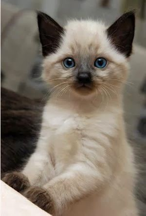 Beautiful Feline: Hola Beautiful Feline te da la Bienvenida...!! http://beautifulfeline26.blogspot.mx/2014/02/hola-beutiful-feline-te-da-la-bienvenida.html