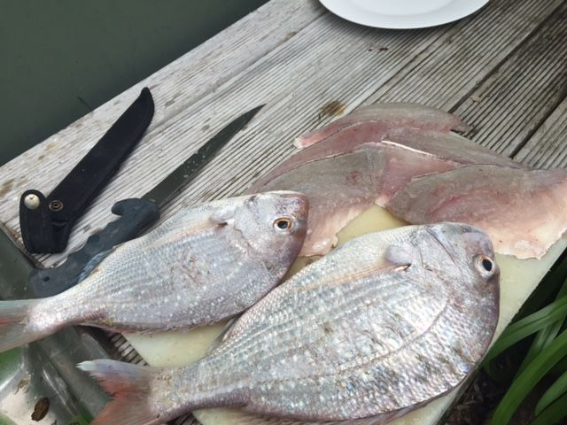 Freshly caught, freshly filleted #Powailodge