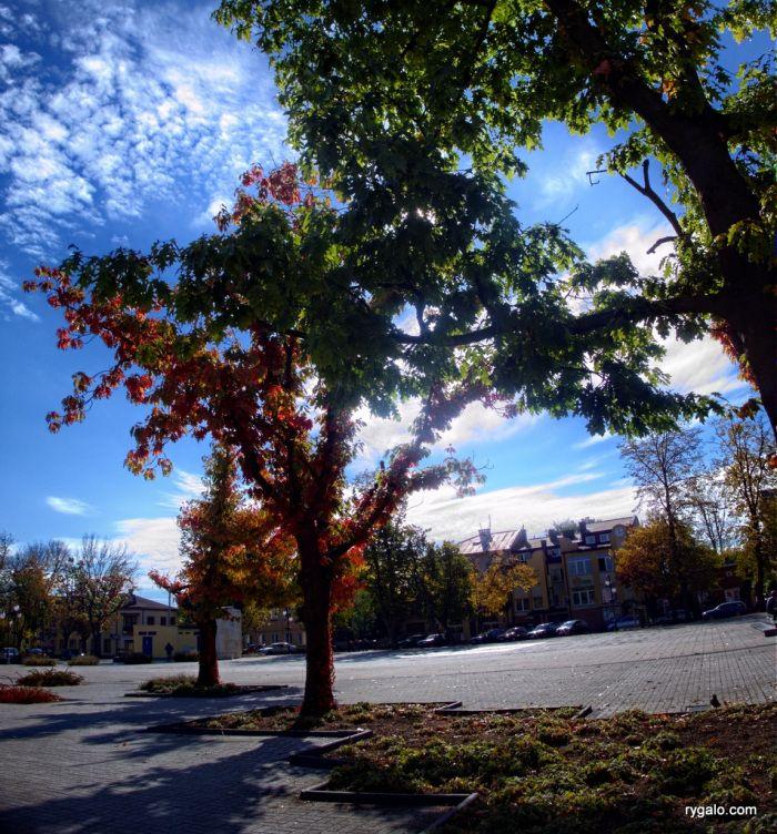 Betonowy park | codziennik