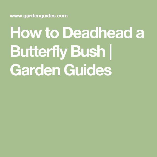 How to Deadhead a Butterfly Bush | Garden Guides